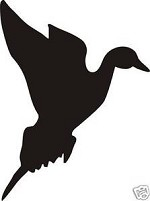 PINTAIL Duck in flight decal sticker