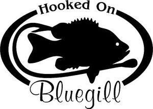 HOOKED ON BLUEGILL Fresh water fish fishing trip lure Car Wall Decal/Sticker Lrg