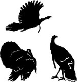 Three Decal set FLYING TOM, JAKE TURKEY, and Struting Hunting Call decal sticker